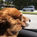 Ricky in car